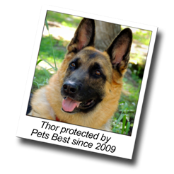 Thor has dog insurance and has been protected by Pets Best since 2009
