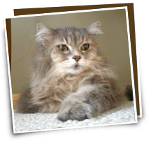 Fluffly cat Daisy wants only the best pet insurance